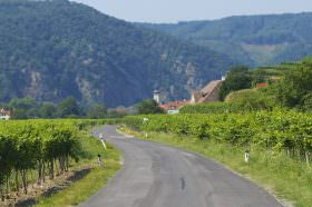 Pedaling Through Vineyards