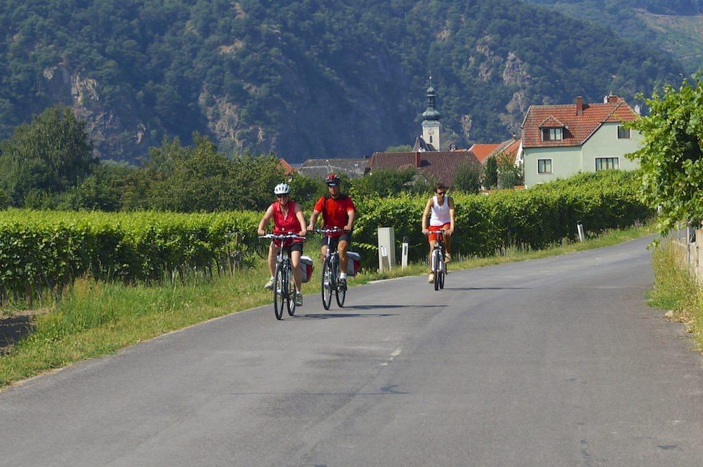 Vineyards and Bikes