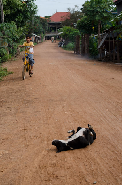 A dog rolls around in the middle of the road in Koh Chen. Photo © 2013 Aaron Saunders