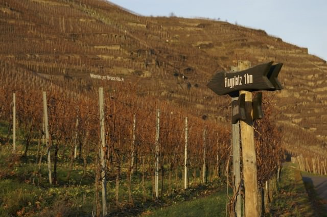Vineyards on the Moselle. © 2013 Ralph Grizzle
