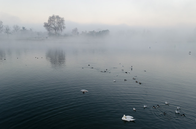 The view this morning: wintery fog and swans off Viking Baldur in Breisach, Germany. Photo © 2013 Aaron Saunders