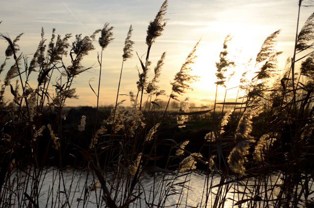 Our late afternoon in Kinderdijk was made all the more spectacular by the sun which, just shy of 4 p.m., was setting. Photo © 2013 Aaron Saunders