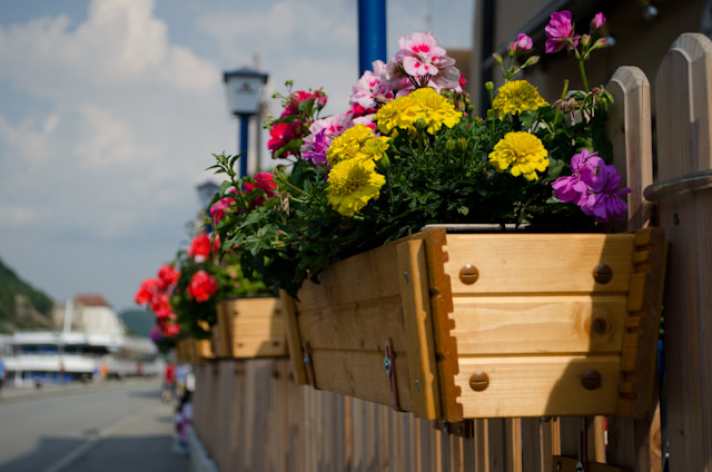 Passau is also a very pretty town, with fresh flowers everywhere. Photo © 2014 Aaron Saunders