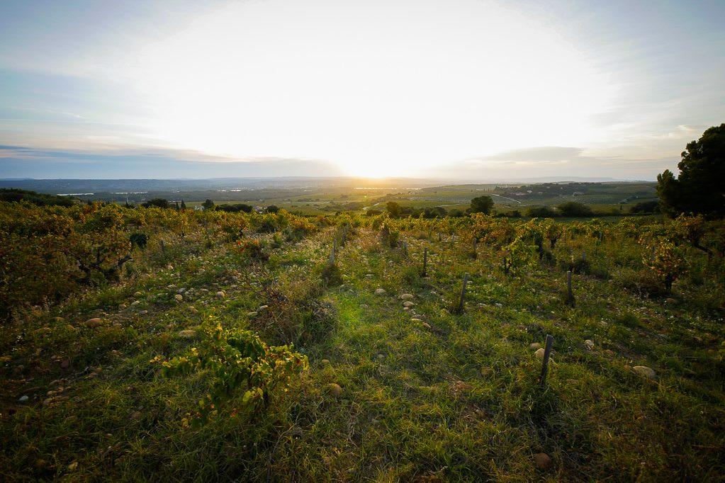 Sunset On Chateauneuf du Pape. © 2014 Avid Travel Media