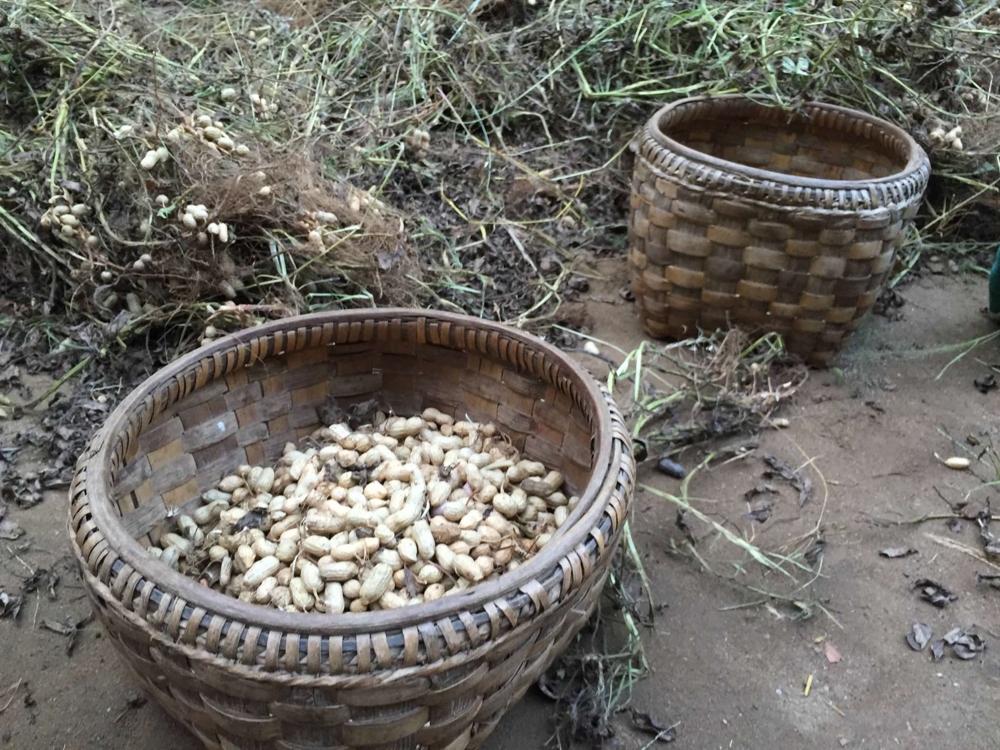 Every women had near her one woven bamboo basket for shells, one woven bamboo basket for the nut. © 2015 Gail Jessen