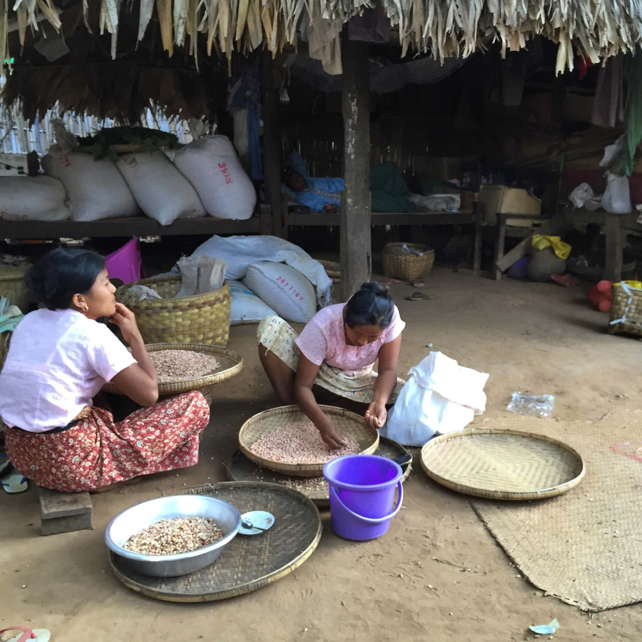 Women prepare peanuts for oil pressing and cooking. Peanuts crops are an economic focus for this village. © 2015 Gail Jessen