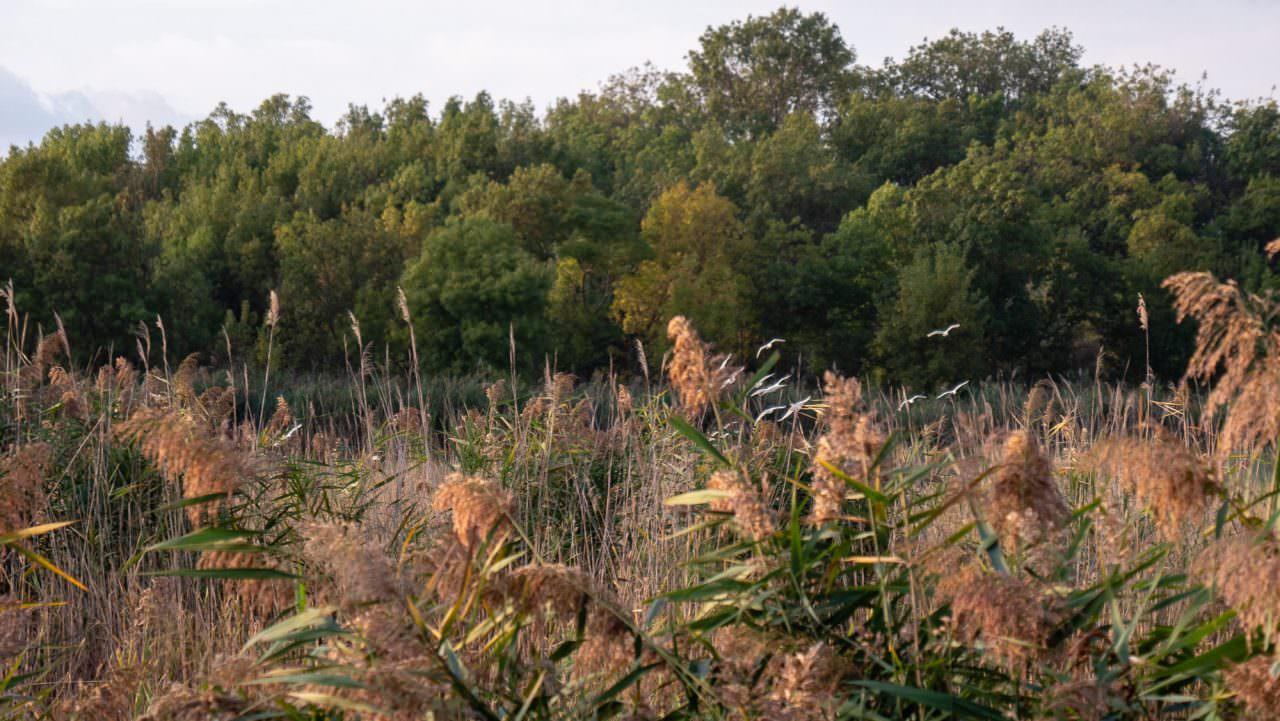 grasslands camargue