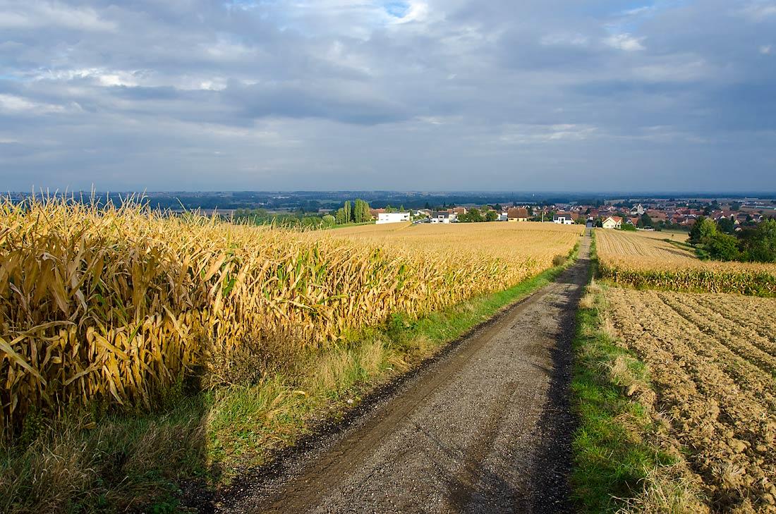 Canaux-Alsace-Marne-Rhin-Waltenheim-champs-45183©Bill Maloney